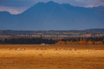 NPCA-antelope-fence_8291-1200px